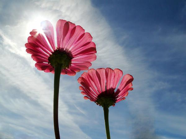 Blumen zwei Paar
